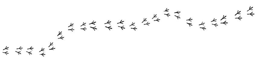 Image result for bird prints clipart