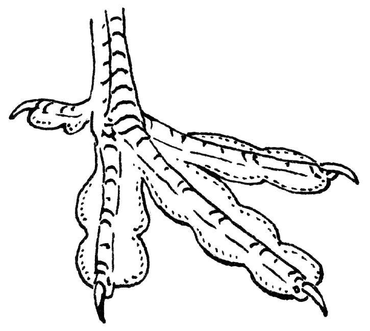 File:Lobate (PSF).png - Bird Foot PNG