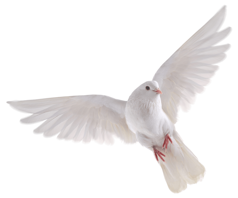 Flying Bird PNG HD