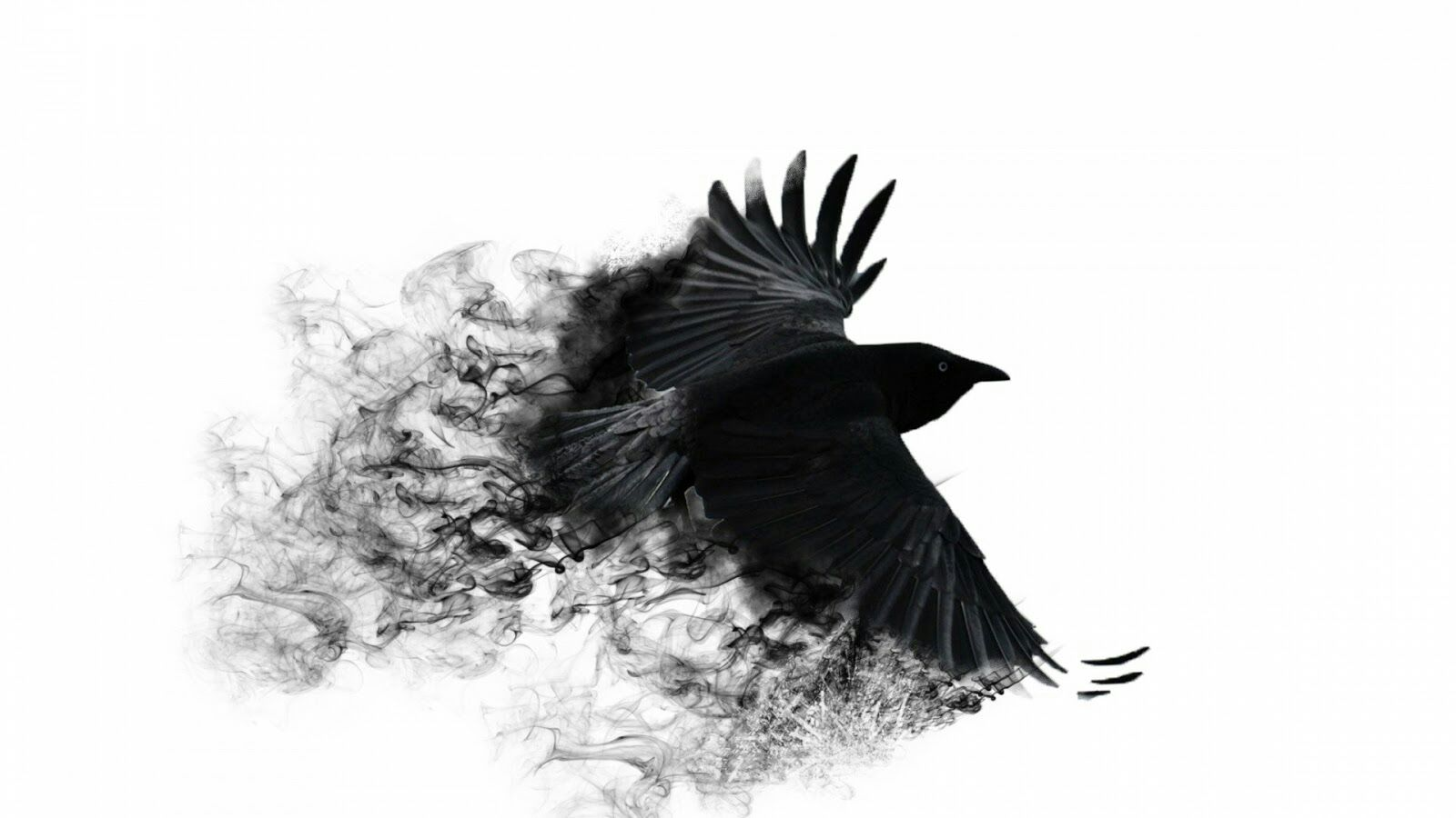 Bird HD PNG - 96795