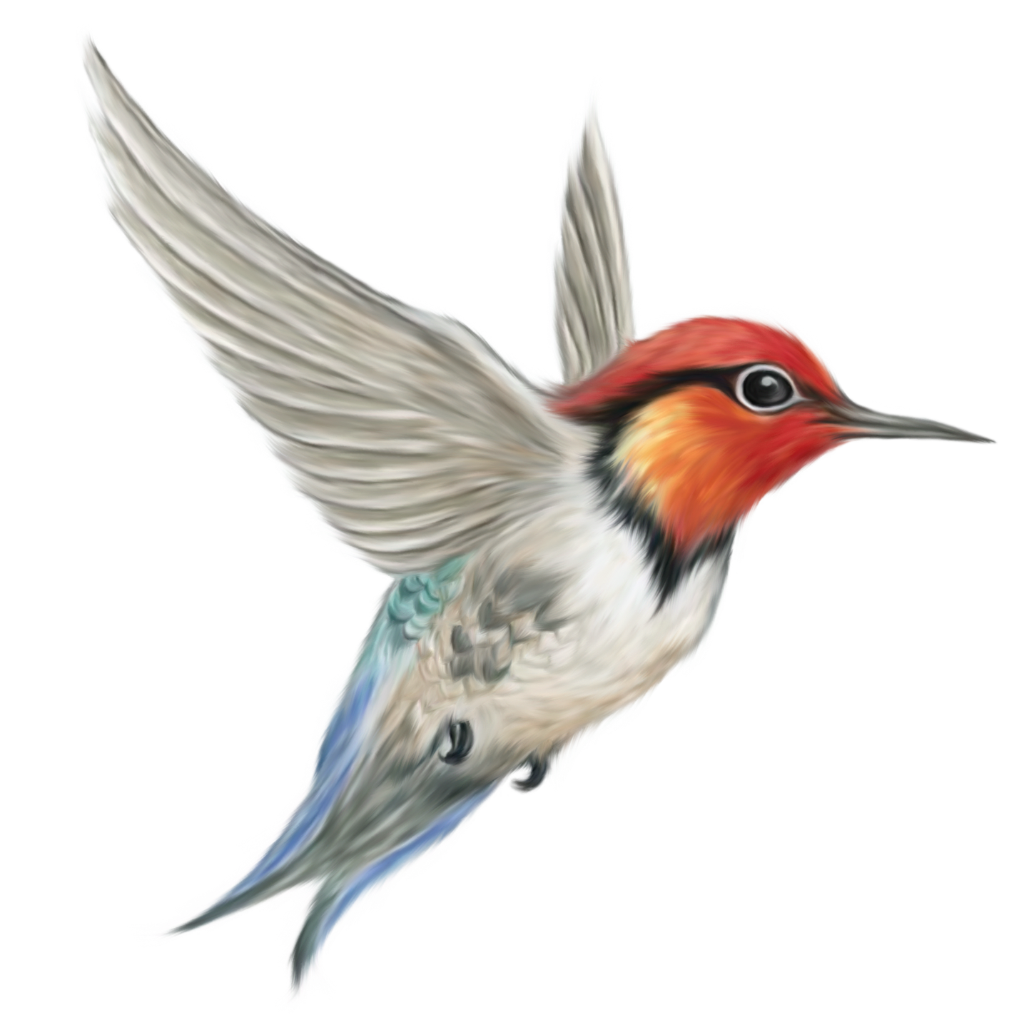 Bird HD PNG - 96798
