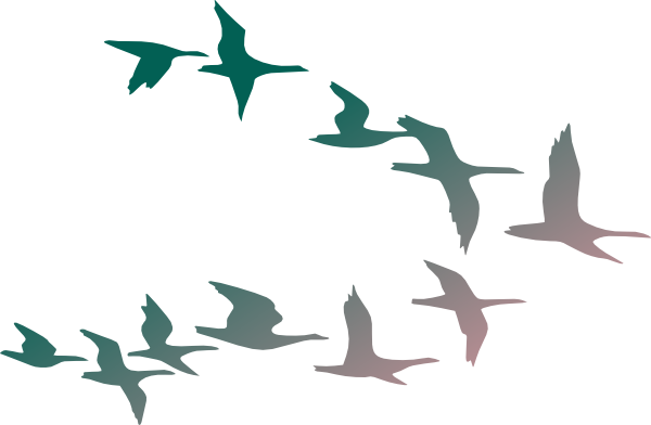Download this image as: - Bird In Flight PNG HD