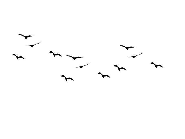 Bird Outline PNG HD - 127204