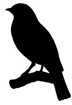bird on branch silhouette - IMG-HD - Bird Outline PNG HD