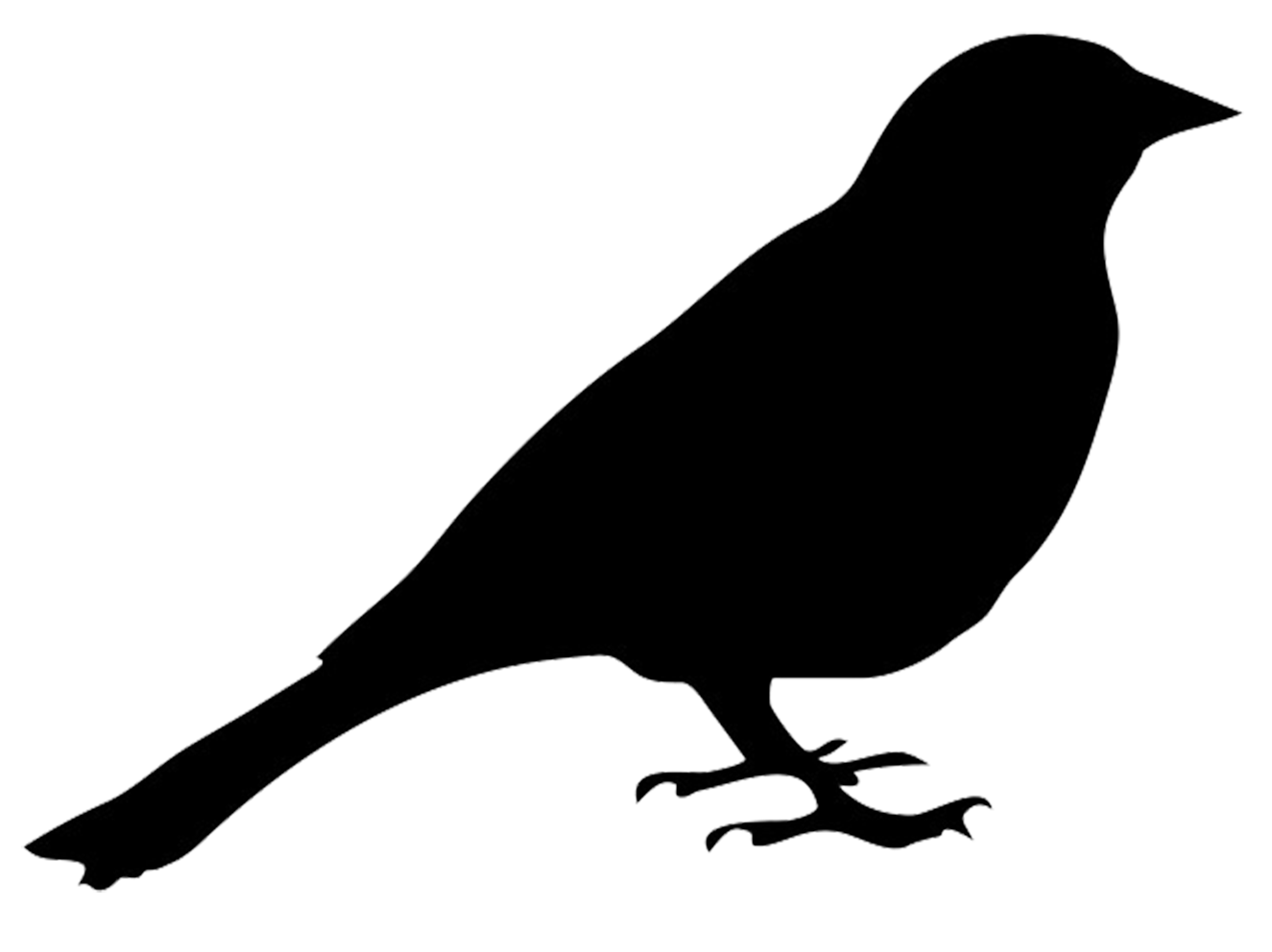 Bird Silhouettes - Bird Outline PNG HD