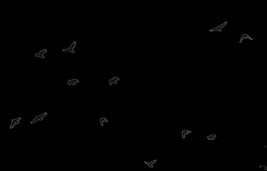 Bird Outline PNG HD - 127208