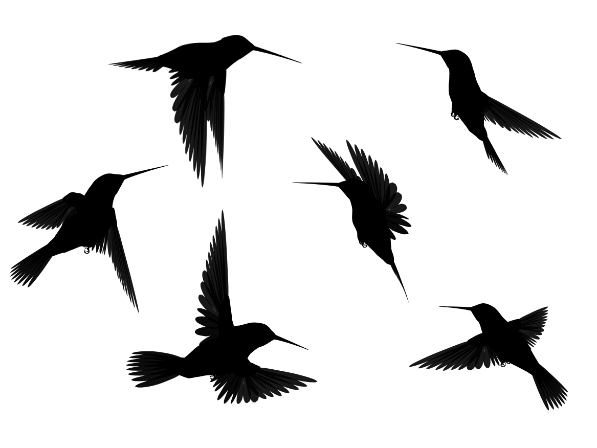 Bird Outline PNG HD - 127207