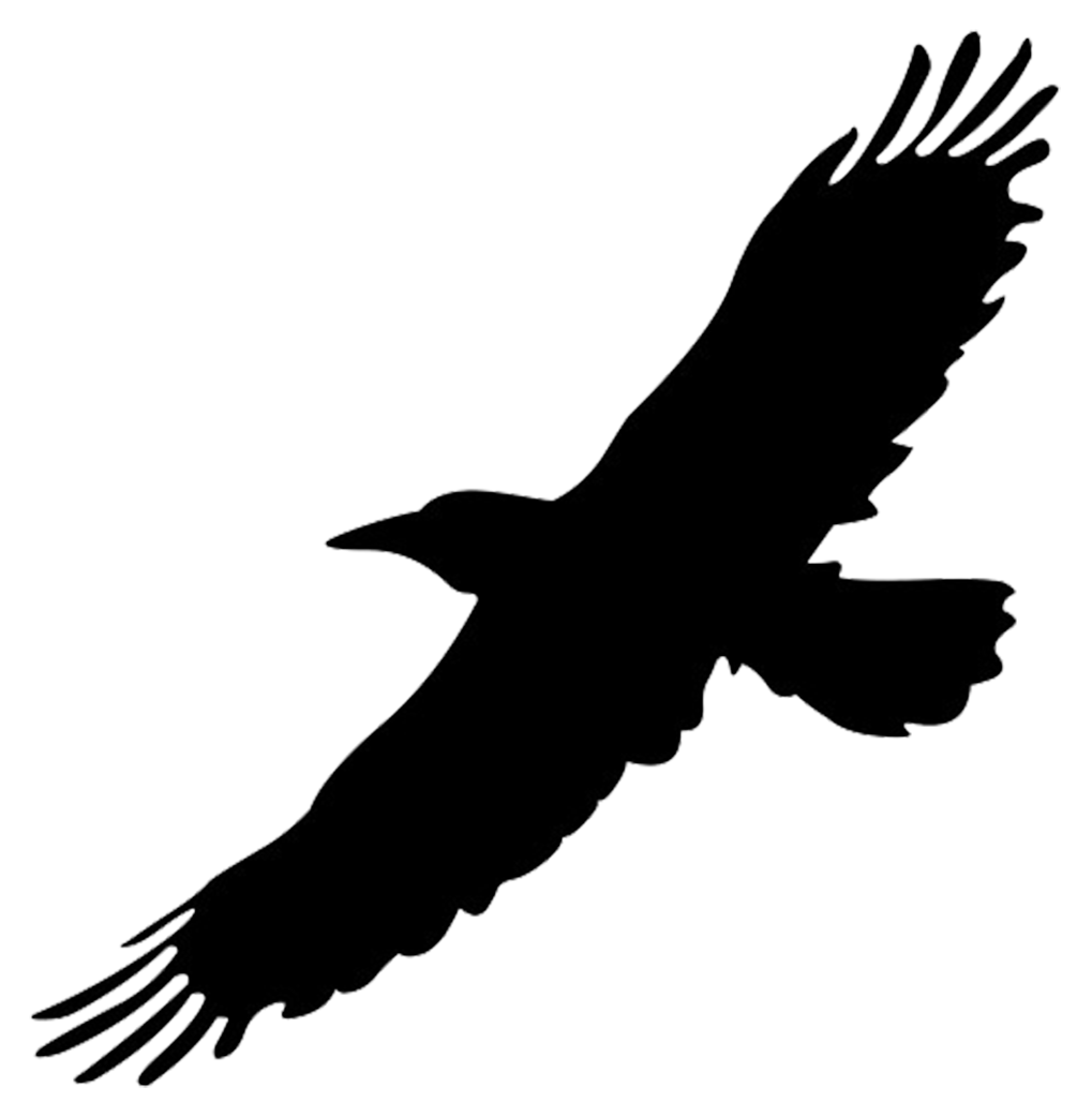 silhouette of flying big bird PlusPng.com  - Bird Outline PNG HD