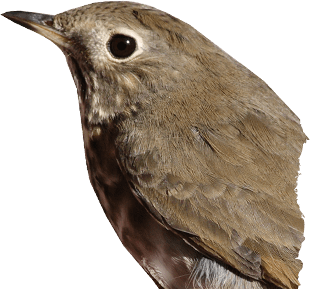 Bird PNG - Woodpecker PNG