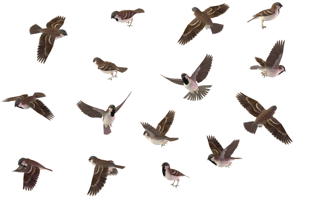 Sparrow PNG - 2973