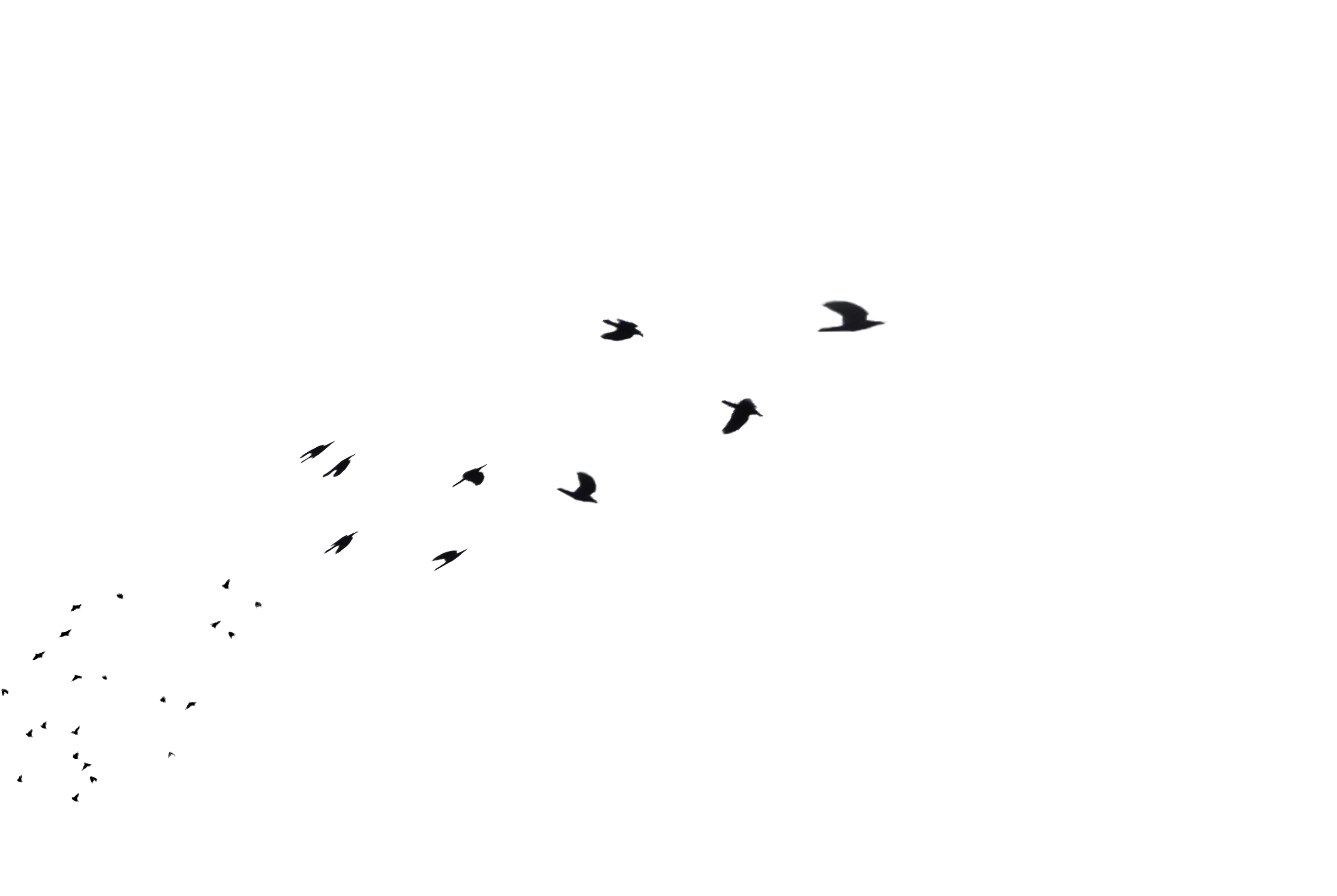 annamae22 36 24 Flock of Birds Flying Away in Distance PNG Stock by  annamae22 - Birds And Fish PNG