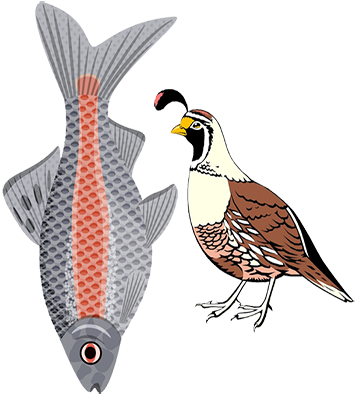 Field Guide Birds and Fish - Birds And Fish PNG