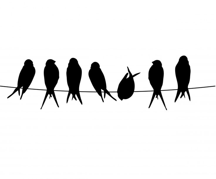 Birds On A Wire PNG - 41744