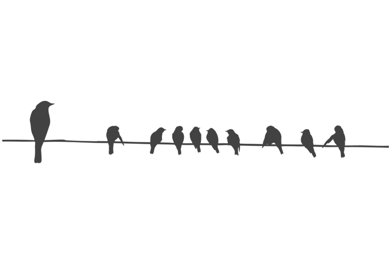 Birds On A Wire PNG - 41732
