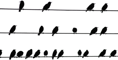 Birds On A Wire PNG - 41733