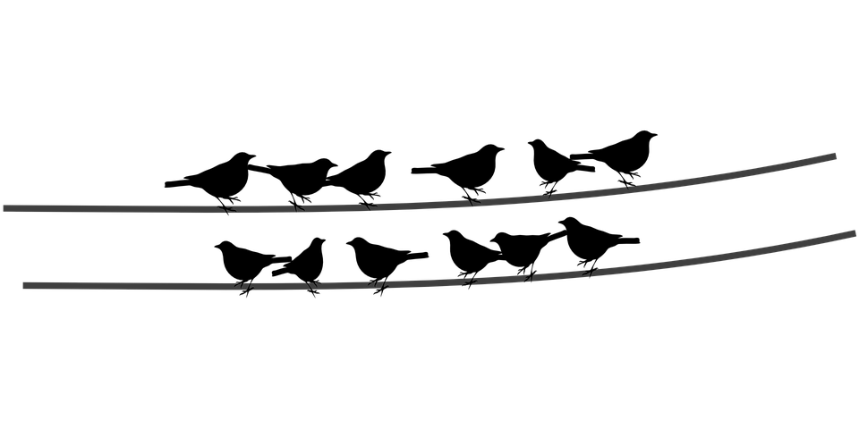 Birds On A Wire PNG - 41737