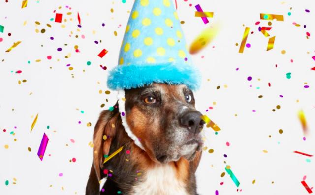 Birthday Dog PNG PlusPNG 640