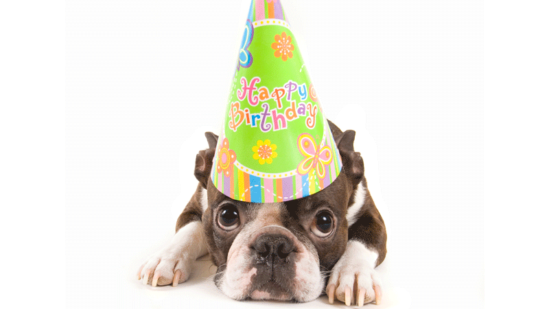 Birthday Dog Png Transparent Birthday Dog Png Images