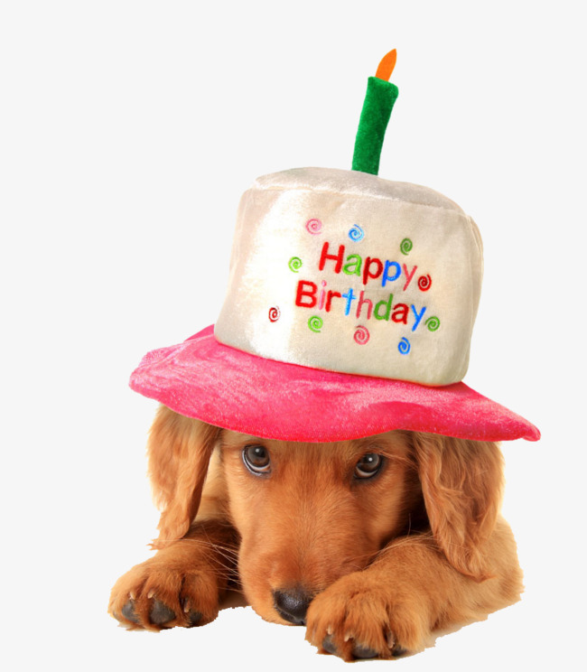 Dogs Wearing Birthday Hats Meng Chong Animal PNG Image And Clipart
