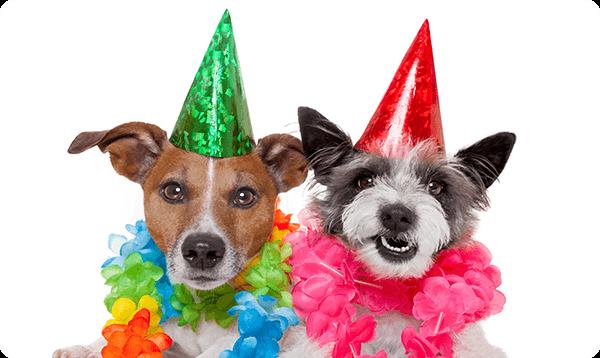 Gift Card Happy Birthday Dog