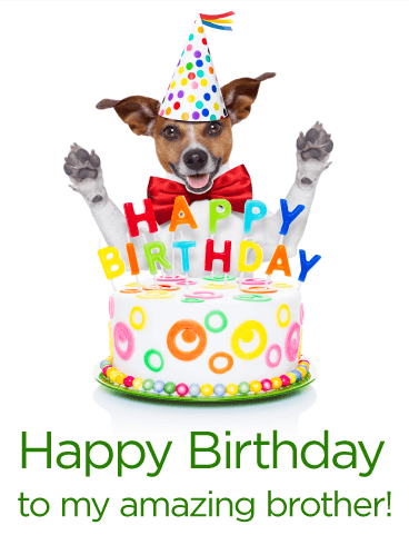 Birthday Dog Png Transparent Birthday Dogg Images Pluspng