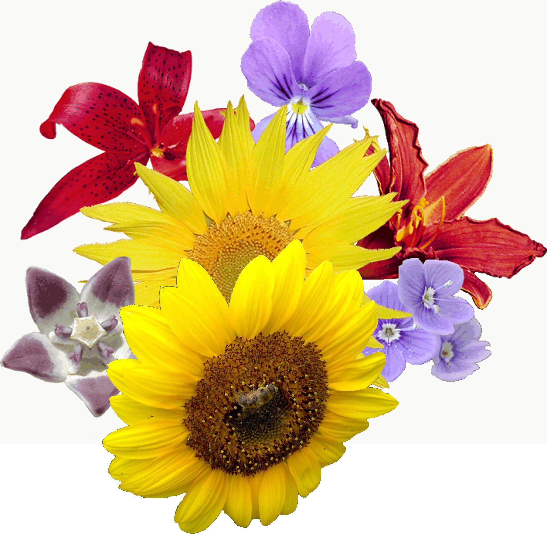 Birthday Flowers PNG HD - 142175