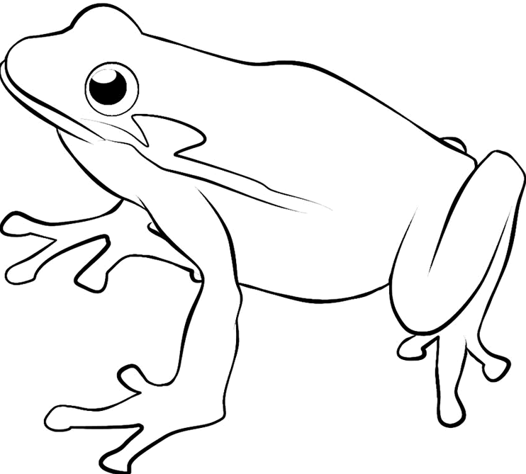 Black And White Frog Transparent Black And White Frog Images