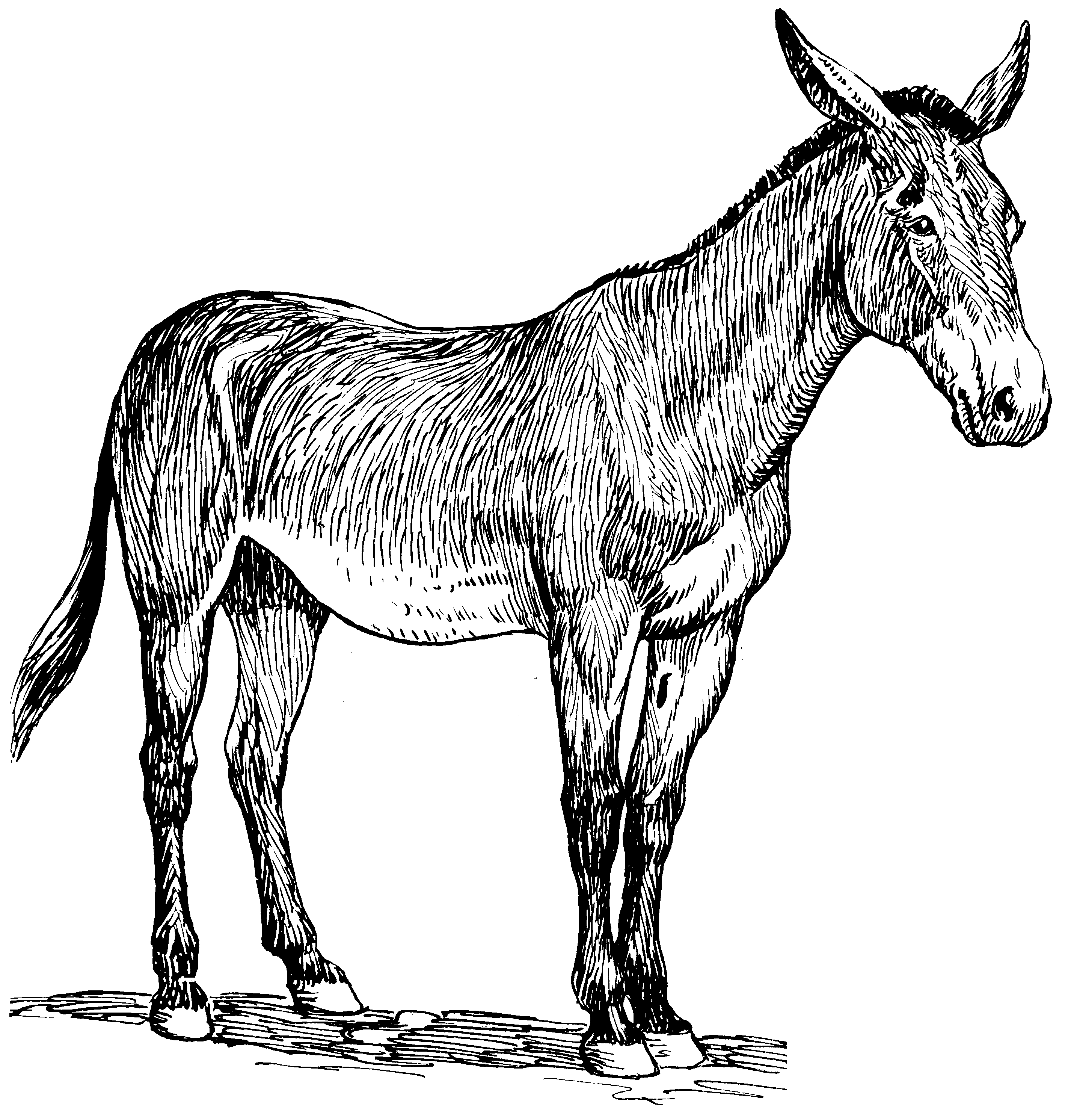 File:Mule (PSF).png - Black And White Mule PNG