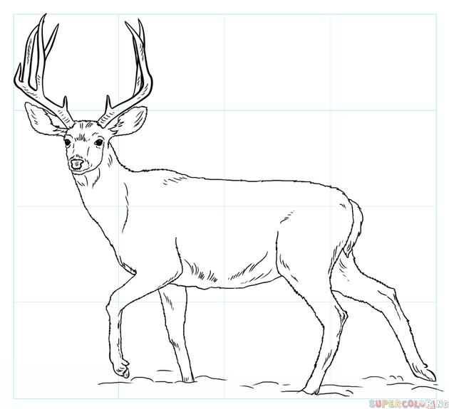 How to draw a mule deer - Black And White Mule PNG