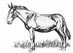 Mule - Black And White Mule PNG