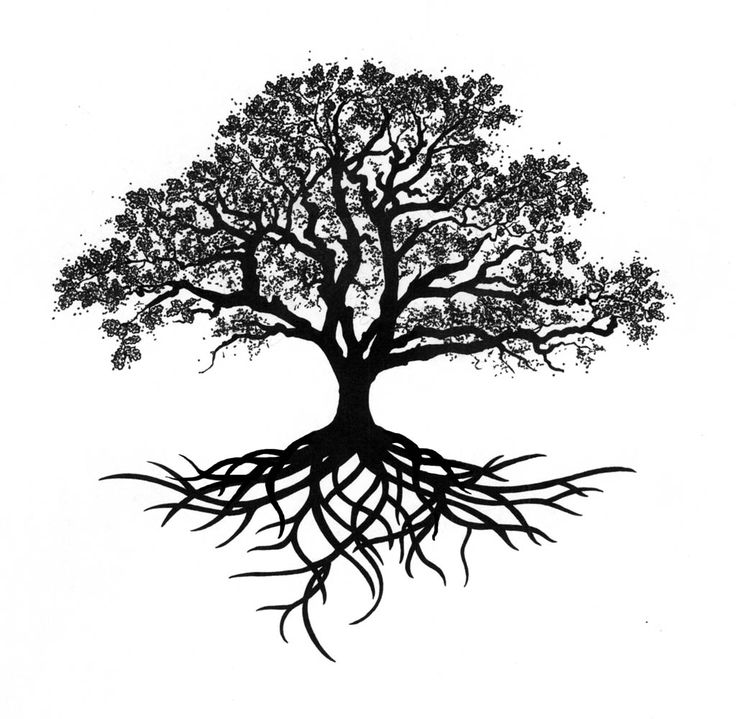 Black And White Tree Of Life PNG - 170286