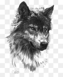 Black And White Wolf PNG - 161856