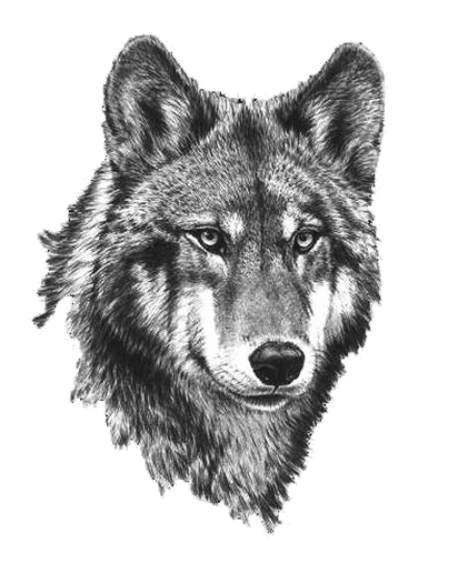 Black And White Wolf PNG