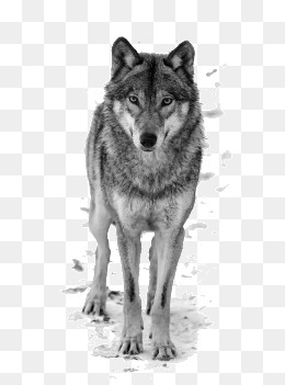 Black And White Wolf PNG - 161849