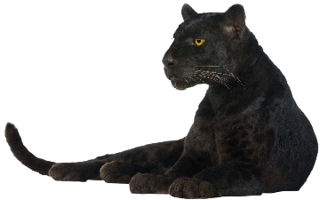 Black Panther PNG - 26510