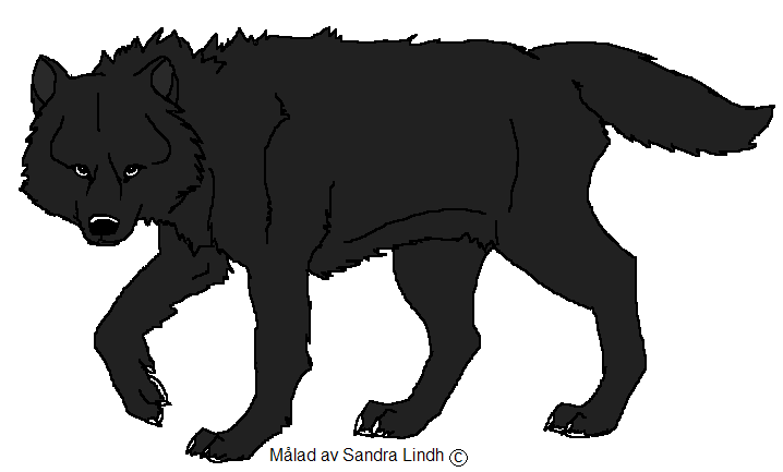 Black Wolf PNG - 163204