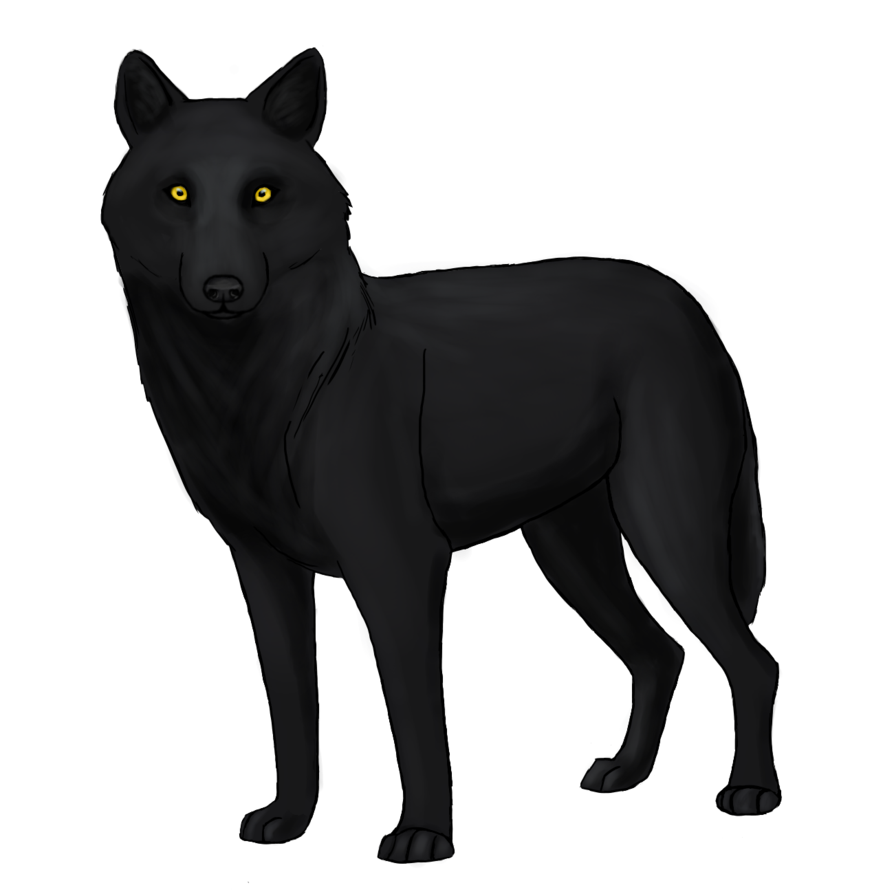Black Wolf PNG - 163193