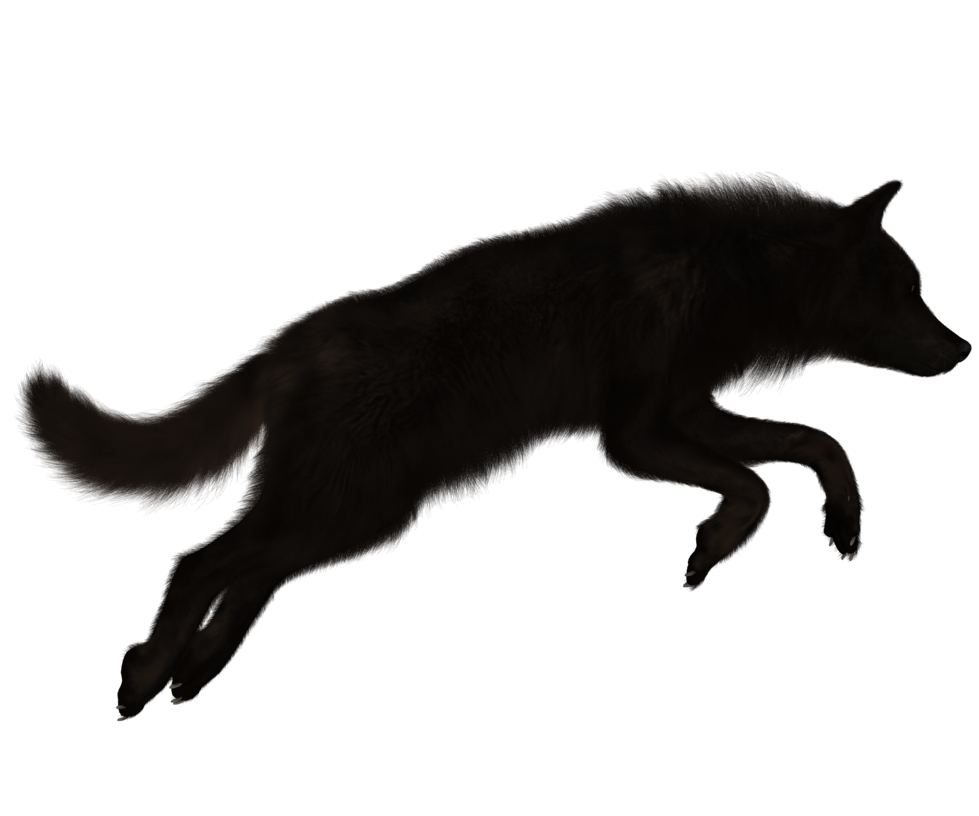 Black Wolf PNG - 163188