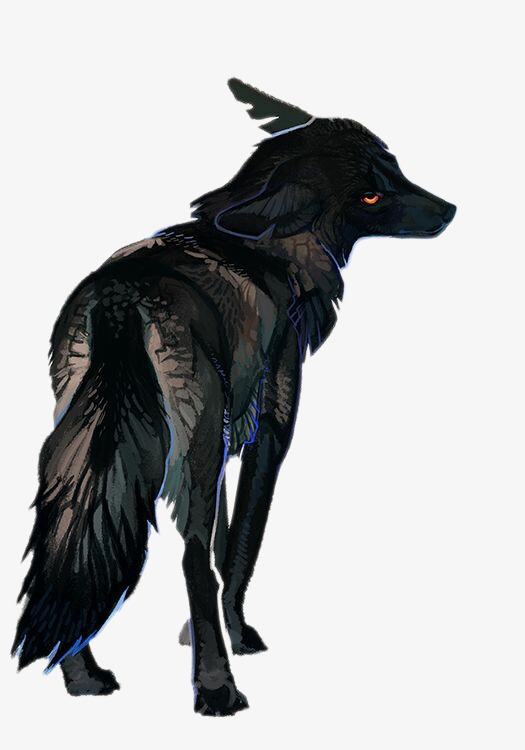 Black Wolf PNG - 163199