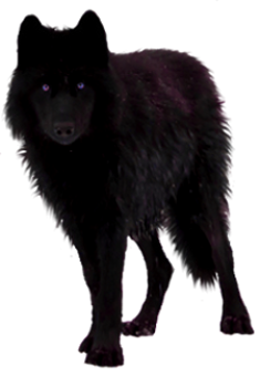 Black Wolf PNG - 163186