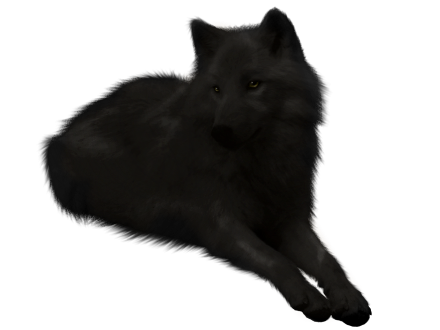 Black Wolf PNG - 163192