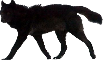 Black Wolf PNG - 163202