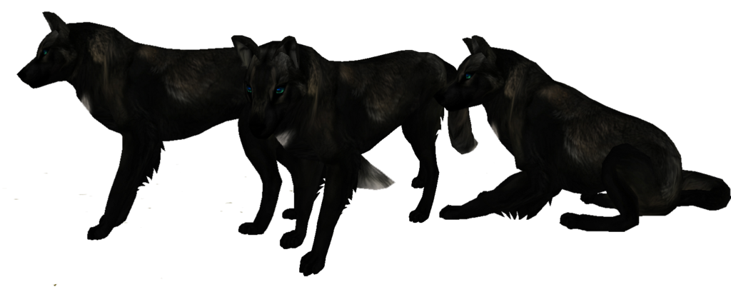 Black Wolf PNG - 163200