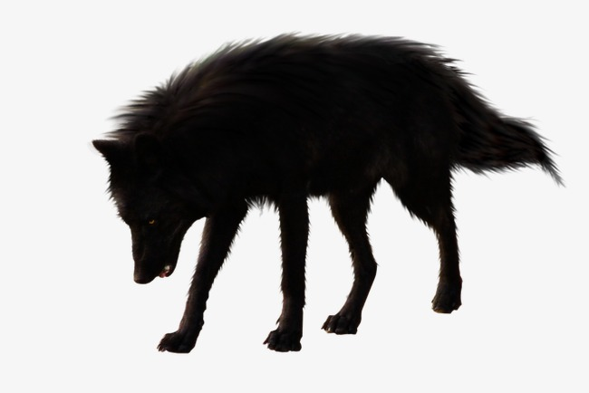 Black Wolf PNG - 163189