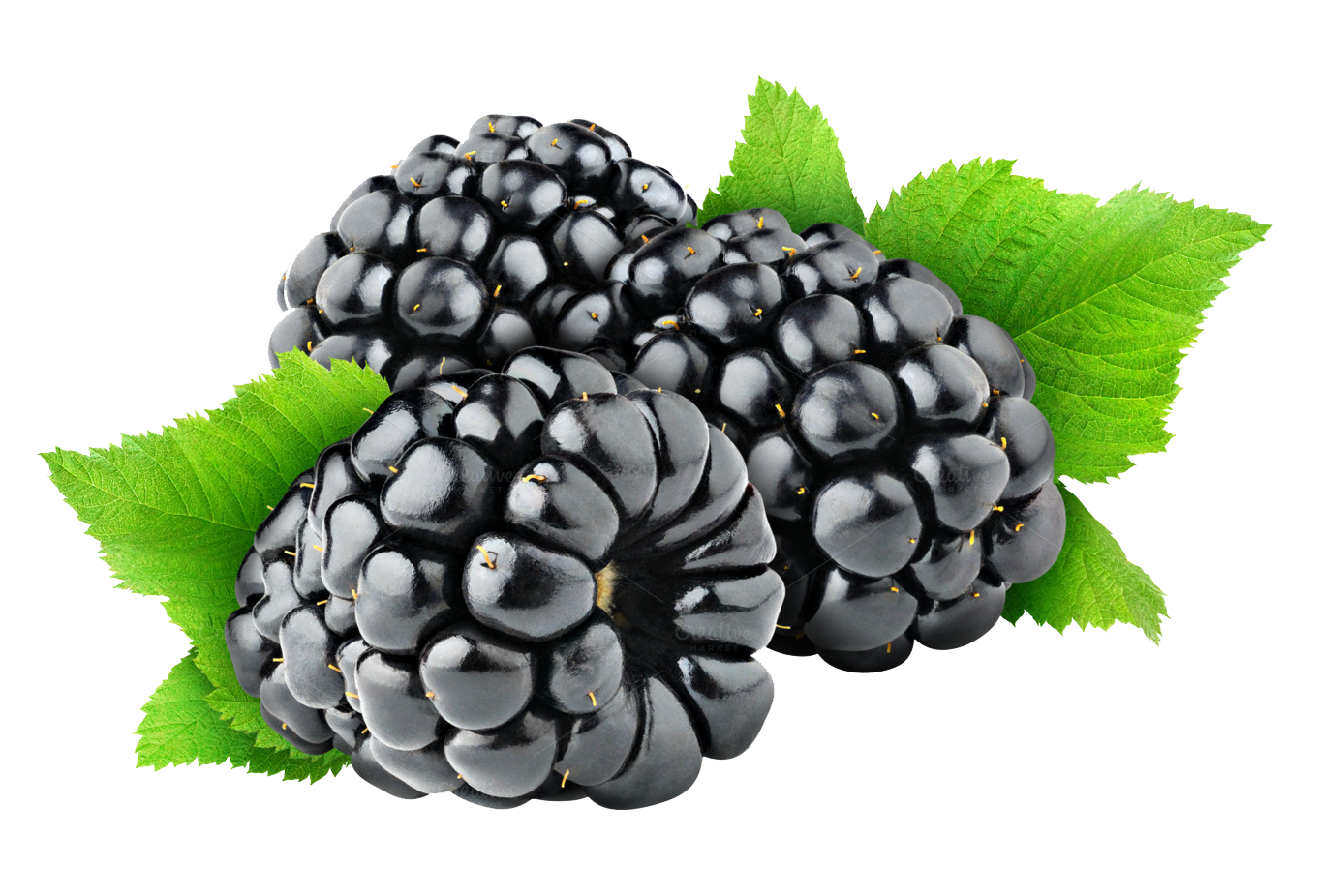 Blackberry Fruit Free Png Image PNG Image - Blackberry PNG