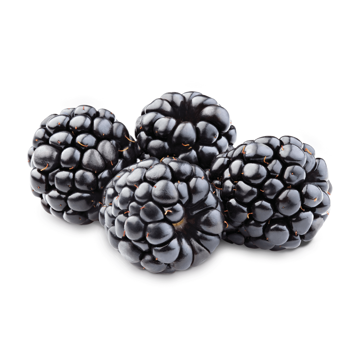 Blackberry Fruit PNG Photo 210x210 - Blackberry Fruit PNG Transparent Free  Images - Blackberry PNG