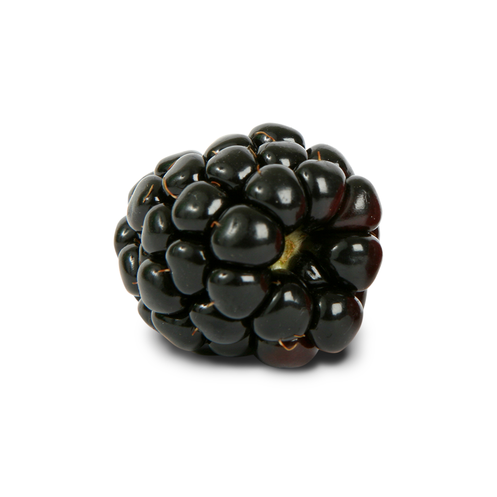 Blackberry PNG - Blackberry PNG