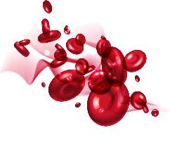 Blood Vessels PNG - 56299