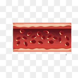 Blood Vessels PNG - 56298