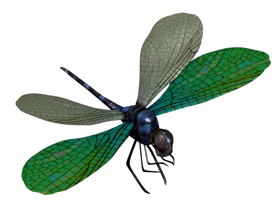 Dragonfly PNG - 1746